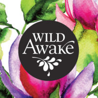 wild awake logo design