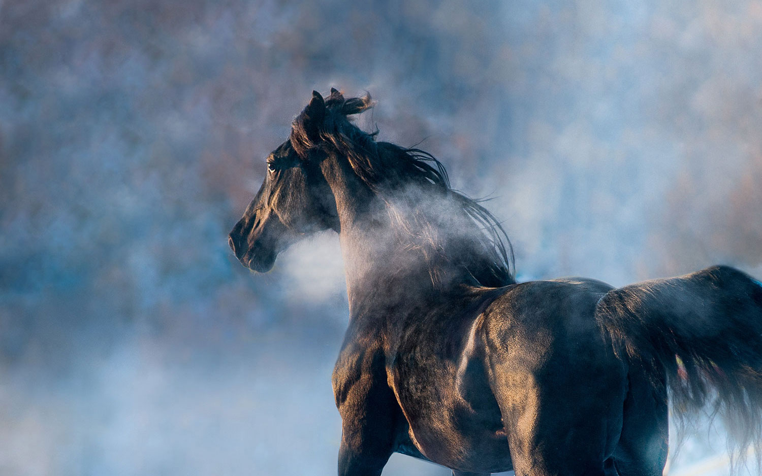 lone horse in mist